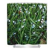 Iceblue Squill Shower Curtain