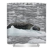 Iced Mother Shower Curtain