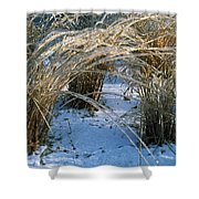 Iced Ornamental Grass Shower Curtain