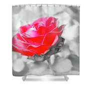 Iced Rose Shower Curtain