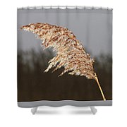 Iced Up Shower Curtain