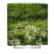 Icelandic Daisies Shower Curtain