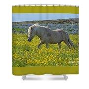 Icelandic Horse, Iceland Shower Curtain