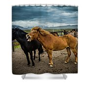 Icelandic Horses Shower Curtain