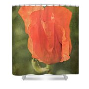 Icelandic Poppy 1124 Shower Curtain