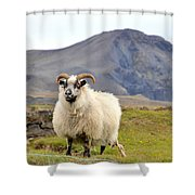 Icelandic Sheep Shower Curtain