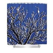 Icey Sparkle Shower Curtain