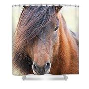 Iclelandic Horse Close Up Shower Curtain