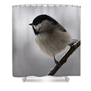 Icy Limbs Shower Curtain
