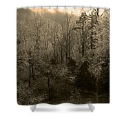 Icy Trees In Sepia Shower Curtain