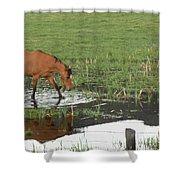 Idaho Farm Horse 2 Shower Curtain