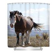Idaho Work Horse 2 Shower Curtain