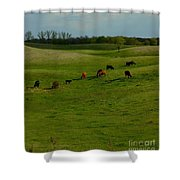 Idyllic Cows In The Hills Shower Curtain