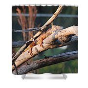 Igauna On A Stick Shower Curtain