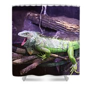 Iguana 339 Shower Curtain