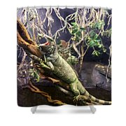 Iguana 340 Shower Curtain
