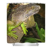 Iguana - A Special Garden Guest Shower Curtain