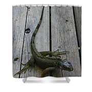 Iguana At The Ready Shower Curtain