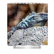 Iguana In Ek Balam Shower Curtain