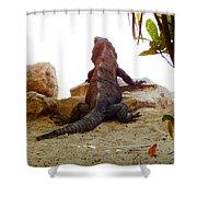 Iguana Watchout Shower Curtain