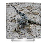 Iguana With A Striped Tail On A Sand Beach Shower Curtain