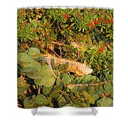 Iguanas Shower Curtain