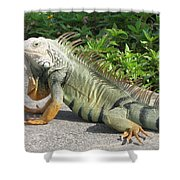 Iguania Sunbathing Shower Curtain