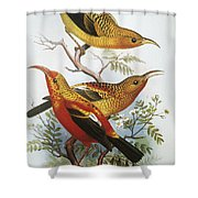 IIwi Shower Curtain