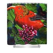 IIwi Scarlet Honeycreeper Bird #339 Shower Curtain