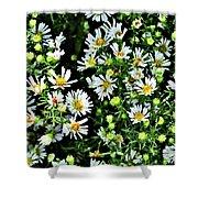 Illinois Wildflowers 1 Shower Curtain