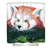 Illlustration Of Red Panda On Branch Drawn With Faber Castell Pi Shower Curtain