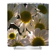 Illuminated Daisies Photograph Shower Curtain