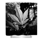 Illuminated Leaf, Black And White Shower Curtain