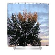 Illuminated Tree Top Shower Curtain