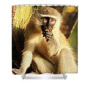 Illuminated Vervet Monkey  Shower Curtain