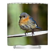 Illusive Female Bluebird Shower Curtain