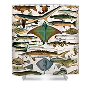 Illustration Of Ocean Fish Shower Curtain