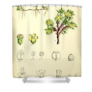 Illustrations Of The Flowering Plants And Ferns Of The Falkland Shower Curtain