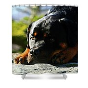 I'm Bored Rottie Shower Curtain