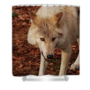 I'm Coming For You Shower Curtain