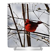 I'm Feeling Rather Red Today Shower Curtain
