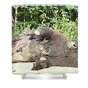 Give Me A Minute, I Know I Can Rollover Shower Curtain