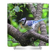 I'm Looking - Blue Jay Shower Curtain