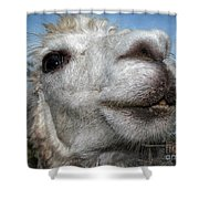Smiling Lama Shower Curtain