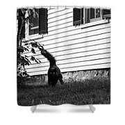 I'm Watching You Black And White Shower Curtain