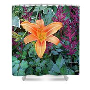 Image Included In Queen The Novel - Late Summer Blooming In Vermont 23of74 Enhanced Shower Curtain
