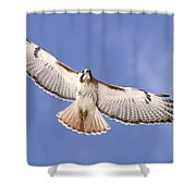 Img-0001 - Red-tailed Hawk Shower Curtain