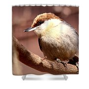 Img_0001 Brown-headed Nuthatch Shower Curtain