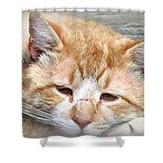 Img_0001 Cat Shower Curtain