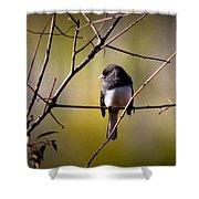 Img_0001 - Dark-eyed Junco - Snowbird Shower Curtain